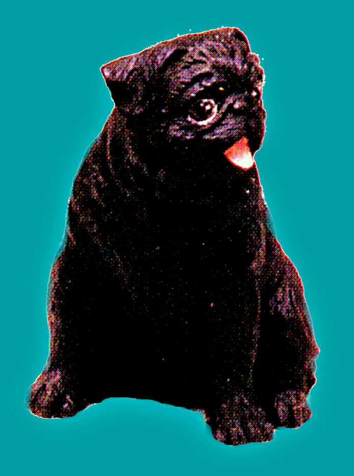 dollhouse pug black